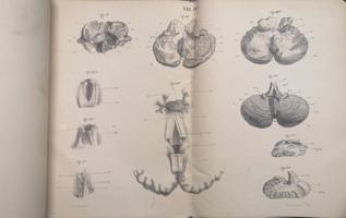 <strong>Contributo alla anatomia del cervelletto umano e dell'apparato ventricolare e della volta a quattro pilastri. Atlante.</strong> (Memoria onorata di un assegno straordinario del R.° Istituto Lombardo di scienze e lettere nell'Adunata solenne del