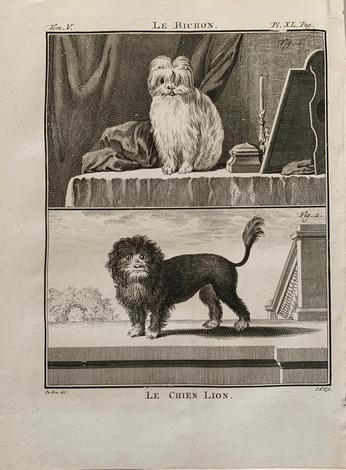 <strong>Le Bichon/Le chien Lion.</strong>